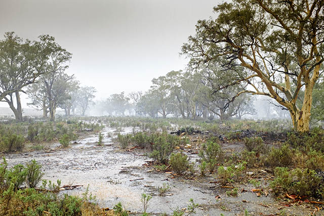 Outback Floods in Summer
